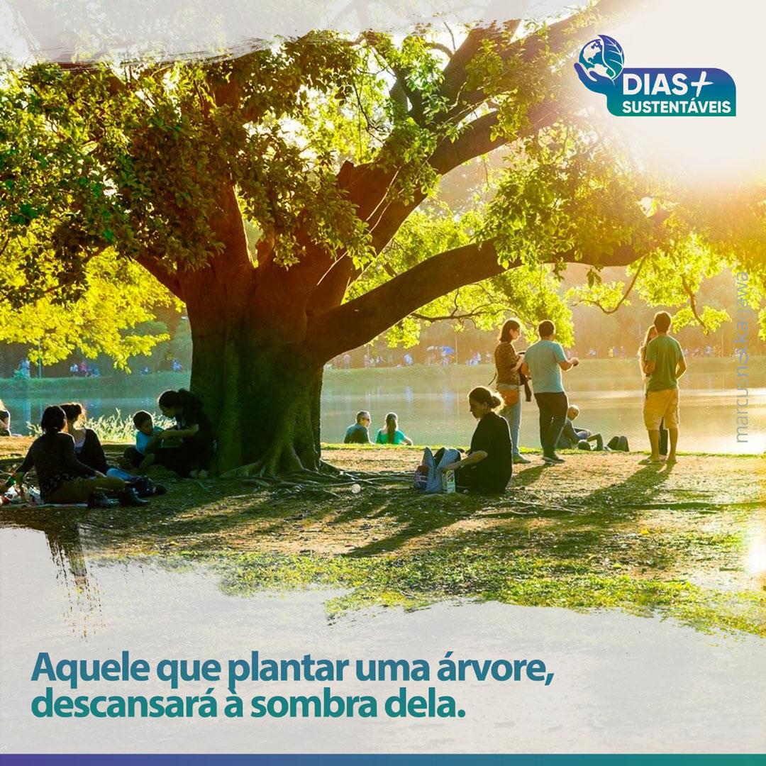 Aquele que plantar uma árvore, descansará à sombra dela